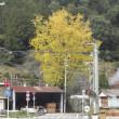 11月22日(水)津木小学校周辺の山々に晩秋の彩りが映えています。