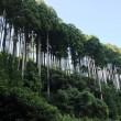 見事な杉の木による造形‥②