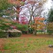 遅くなりましたが小さな秋の写真です