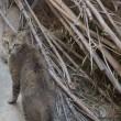 ネコ歩きナイト & ゴゾ島へ