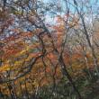 赤城山 / 前橋市 - 黒檜山・駒ケ岳 紅葉始まる