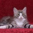 プロミスの子猫です。5/20日