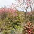 [上野さん祝辞]誰かのため頑張る人に/赤、桃、白の三色花桃。ピンクの菊桃。
