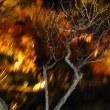 男一人旅コウヨウガリダ~カマクライッテキマシタ~4 長谷寺ライトアップ2008