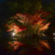 白鳥庭園 宵の観楓会