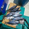9日 沖釣りの釣果です