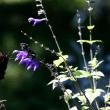 トンボと蝶。