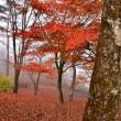富士五湖紅葉