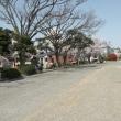 続 桜満開の岡山後楽園