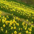 春を感じる写真ー8