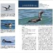「北海道の海鳥4 アビ類」発刊のお知らせ