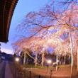 般若院の枝垂れ桜ライトアップ