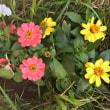 お庭のお花🌼
