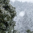 2018/03/21 春分の日 雪になりました!