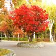 北大構内は 札幌のお手軽な紅葉スポット まだ早いですが・・・