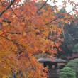 都立庭園・旧古河庭園の紅葉・こさのぼ散歩