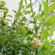 本榊は花盛り