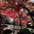 京都 (永観堂)秋なので久しぶりのカラーです。 Sigma sd Quattro H