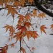 白鳥は雪景色