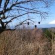 矢倉岳 低山ハイク