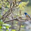 青い鳥と黄色い鳥