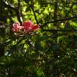 国見山の花(10/13、残り)