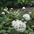 紫陽花の須磨離宮公園