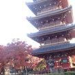 寛永寺の五重塔