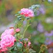 庭の花から
