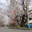 徳島県のさくら開花情報in岩脇公園