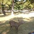 森(トレランマイスターになりつつあるようなないような+奈良公園は近かった)
