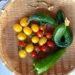 2017年野菜収穫 NO1
