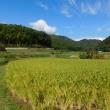 2017年10月9日:もうすぐ稲刈りです。