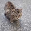 小田原のネコ
