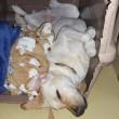 【今週のオレオ と クッキーの寝顔・寝姿】+【「ナッツ感謝祭」の準備開始】