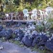 ロックガーデン風の庭