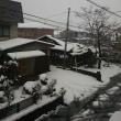 とうとう雪が積もりました