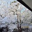 千葉の降雪