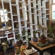 苔とミニ盆栽の『苔屋』さんに行ってきました