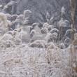関東は大雪