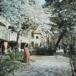 ◆ 花の道より