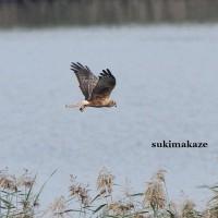 水面を飛ぶ 9