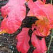 紅葉など楽しみつつ、ちょっとだけキノコ・・・まぁお山のキノコ第二回には違いない。