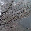 3月9日   雨粒の輝き