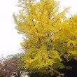 落葉の盛合せ