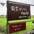念願のタルトぉ~♡ ~薪窯ピッツァ Feliche(フェリーチェ)~