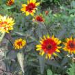 花の庭へ 6月下旬