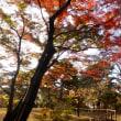 東京都の殿ヶ谷戸(とのがやと)庭園2018年の紅葉