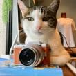 写真と忍耐