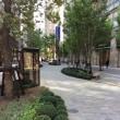 街ナカみどり   東京ミッドタウン日比谷のマメツゲの秘密
